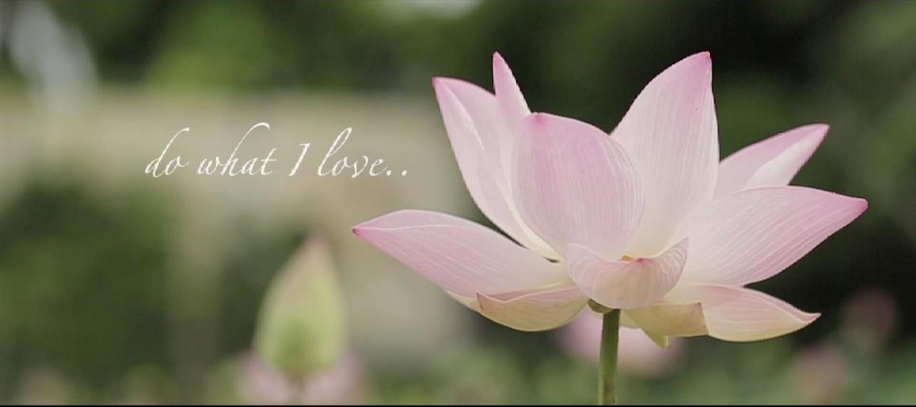 Royal Lotus Tea Health Benefits